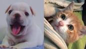 개동생과 야옹형의 귀여운 동거