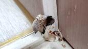 새 아파트에서 버섯이 자란다<br>믿을 수 없는 황당 하자들